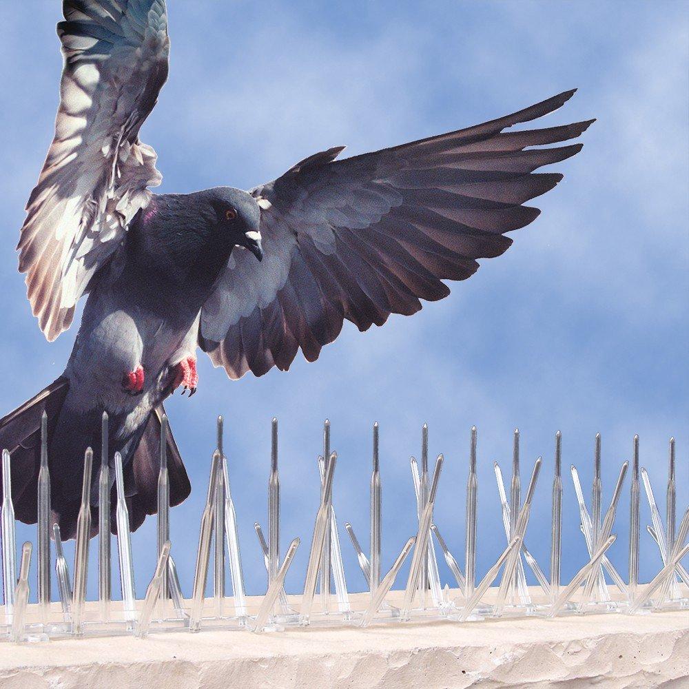 Bird Spikes Geelong Amp Bird Spikes Melbourne Bird Control