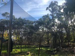 Orchard Netting